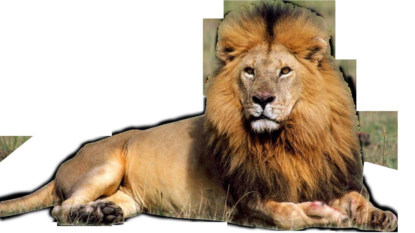 svg free download Png images download clipart. Transparent lion
