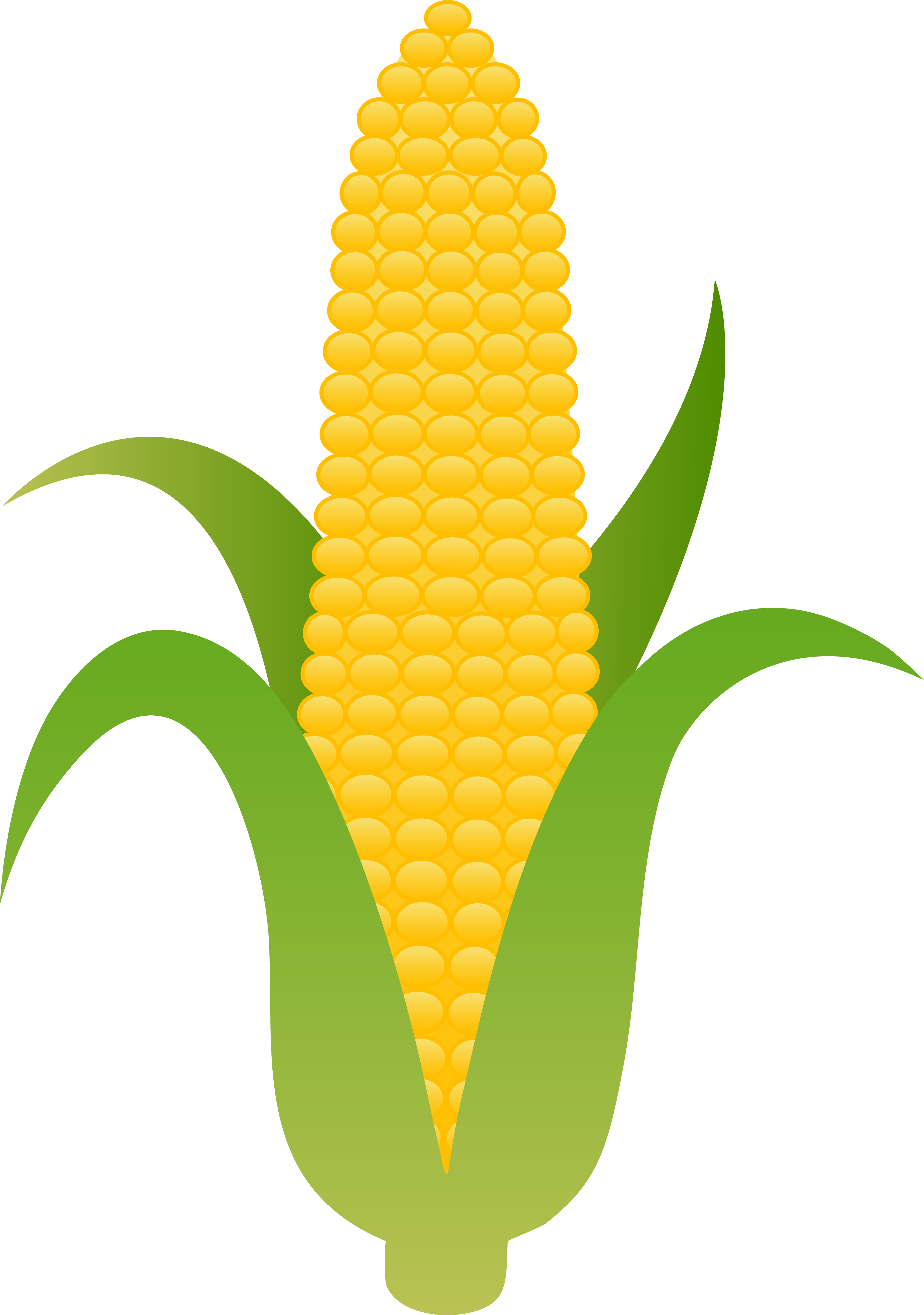 vector transparent library Ear of Yellow Corn