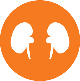 vector royalty free stock Transplant center uf health. Kidney clipart kidney donation.