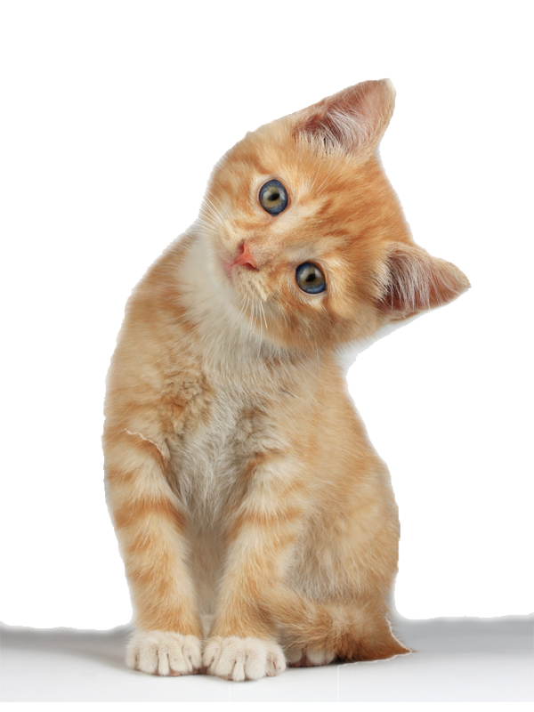 picture library Kitten clipart. Realistic free on dumielauxepices