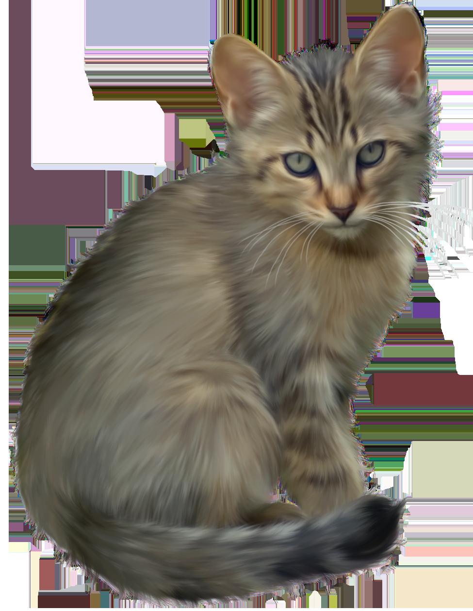 jpg black and white stock Cute png best web. Kitten clipart