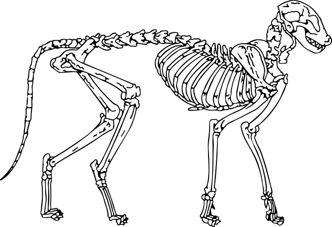 picture library library Cat Skeleton Drawing at GetDrawings