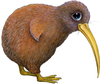 picture transparent stock Kiwi clipart animal sea nz. Pip the cute images.