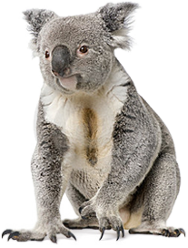 clipart library stock Png hd images pluspng. Koala transparent