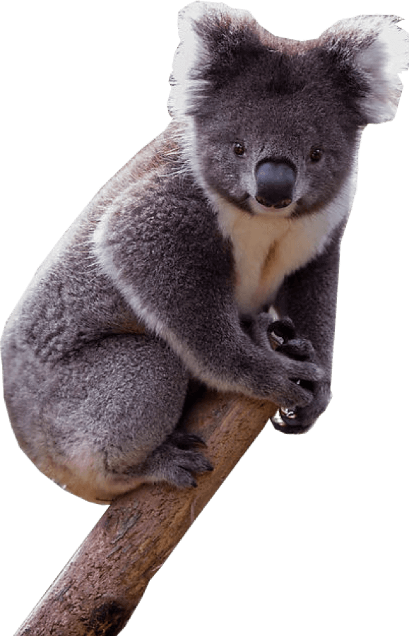 vector free stock Png image free images. Koala transparent