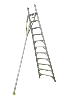 image stock Aluminium Orchard Ladder