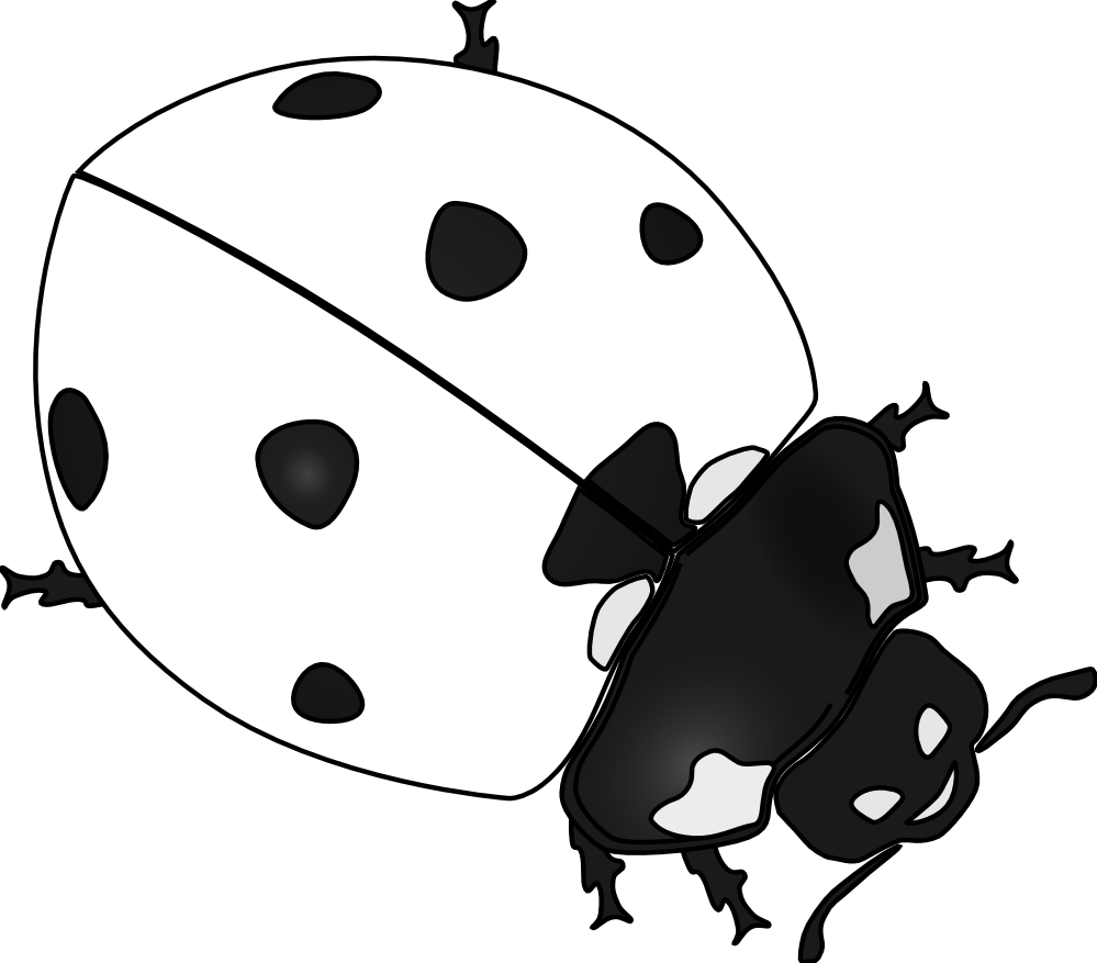 vector free Art panda free images. Ladybug black and white clipart