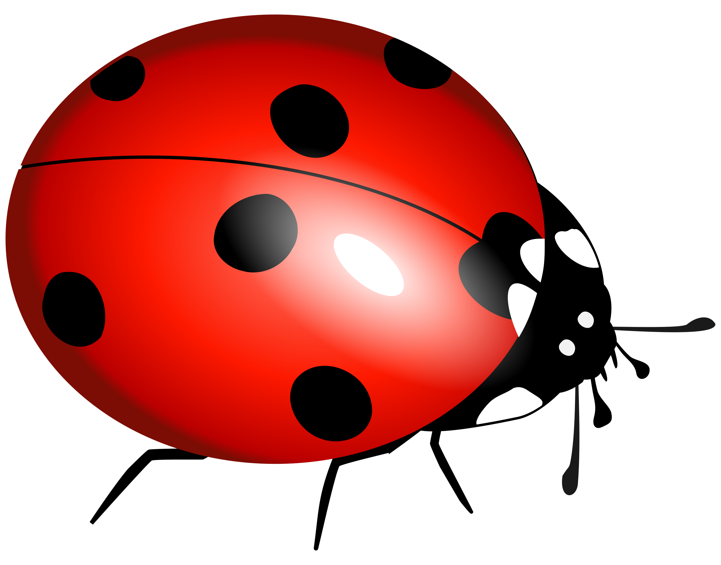 banner black and white stock Ladybug Clipart File