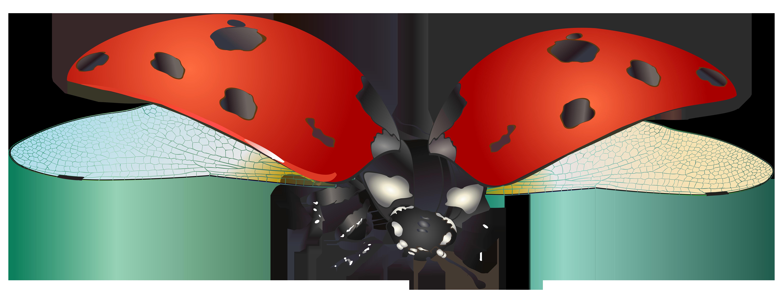 png freeuse Flying Ladybug PNG Clip Art Image