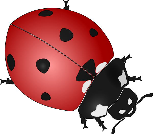 graphic stock Pencil and in color. Ladybug clipart realistic