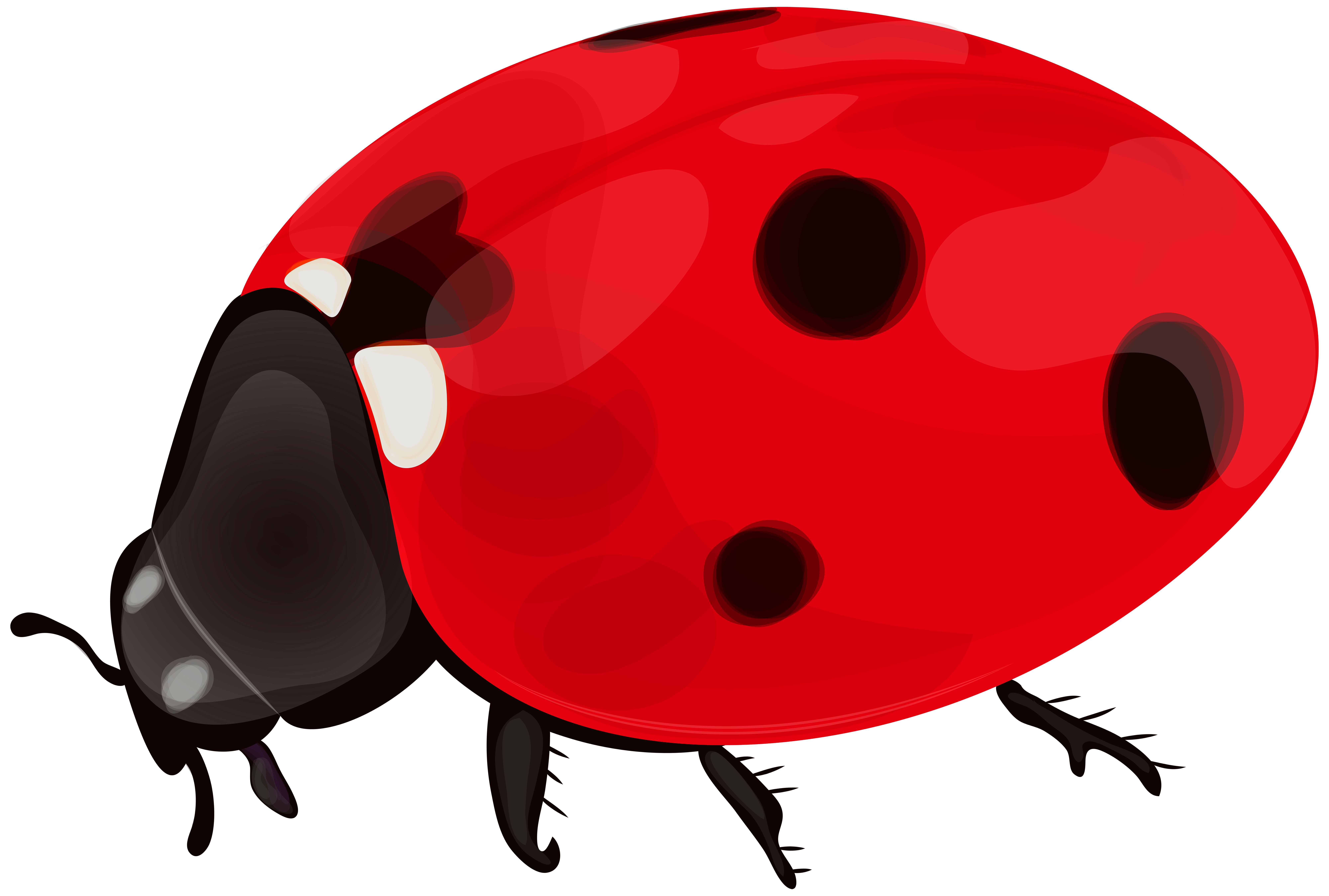 banner library stock Png clip art gallery. Ladybug clipart transparent background.