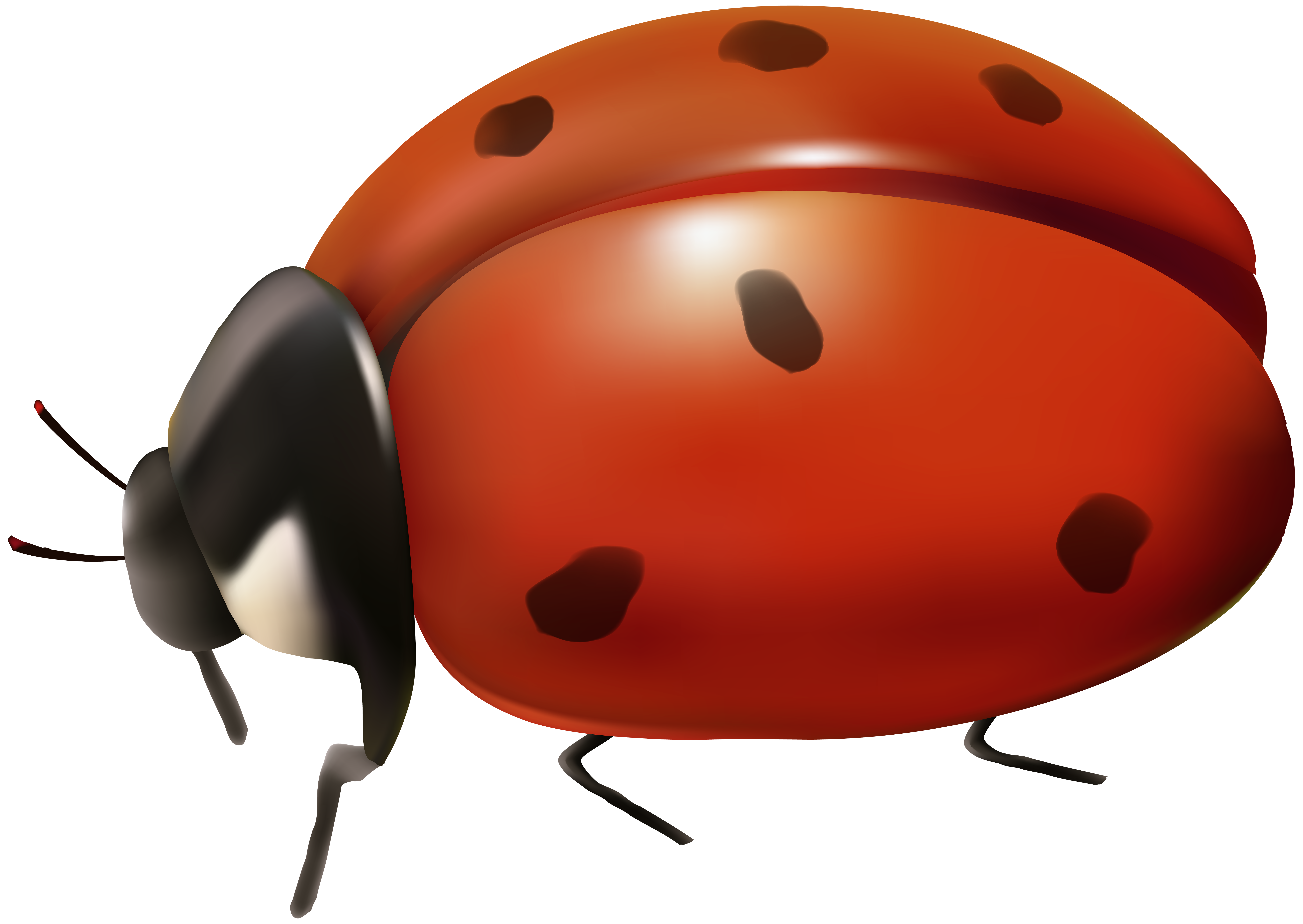 banner black and white stock Ladybug transparent. Clip art gallery yopriceville