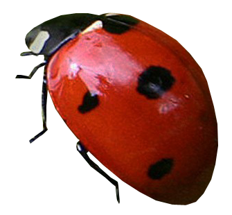 clip art royalty free stock Ladybug transparent. Ladybugs gallery isolated stock