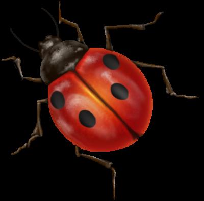 graphic royalty free library Ladybug transparent background. Ladybugs gallery isolated stock