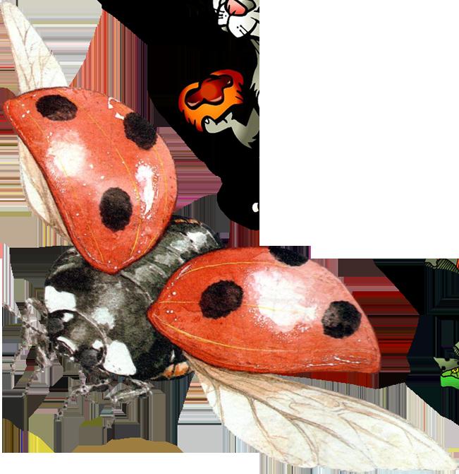 image black and white Ladybug PNG Image
