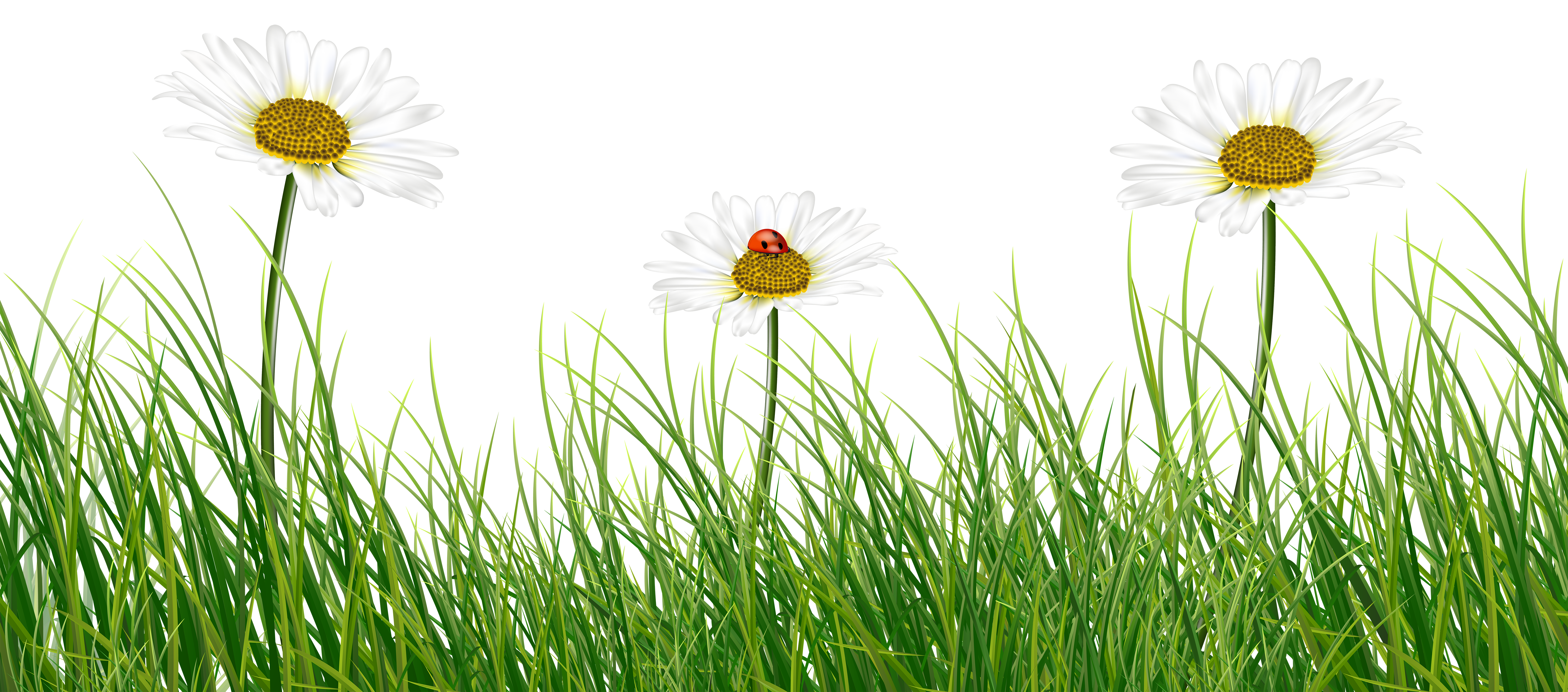 png free stock Green grass with daisies. Ladybugs clipart family.