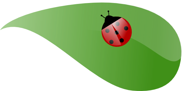 image transparent stock Ladybug On Leaf Clipart