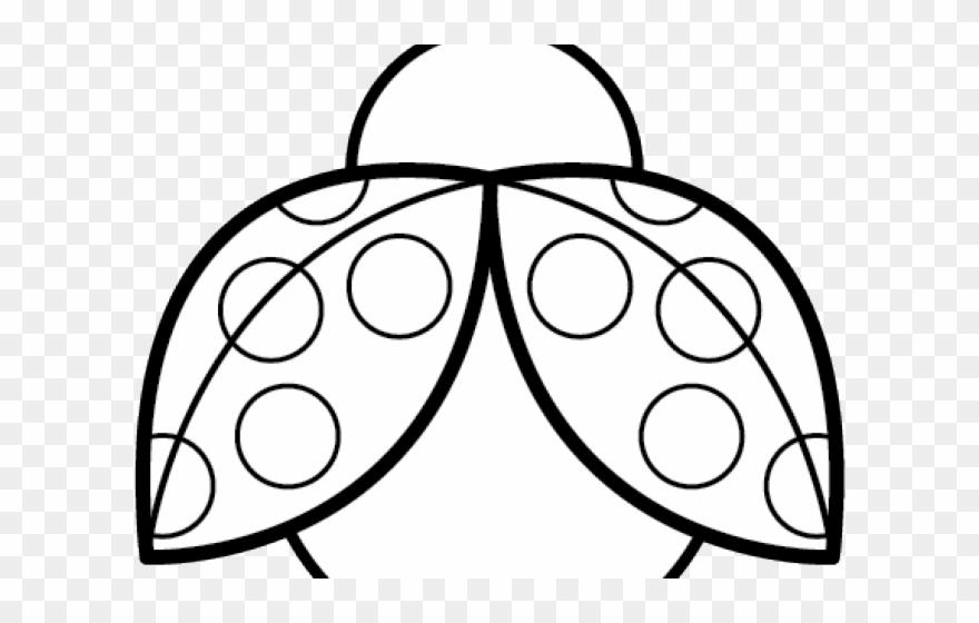 image freeuse stock Ladybugs clipart symmetrical. Symmetry ladybug lady bugs.