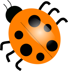 transparent download Ladybugs clipart vector. Orange clip art at.