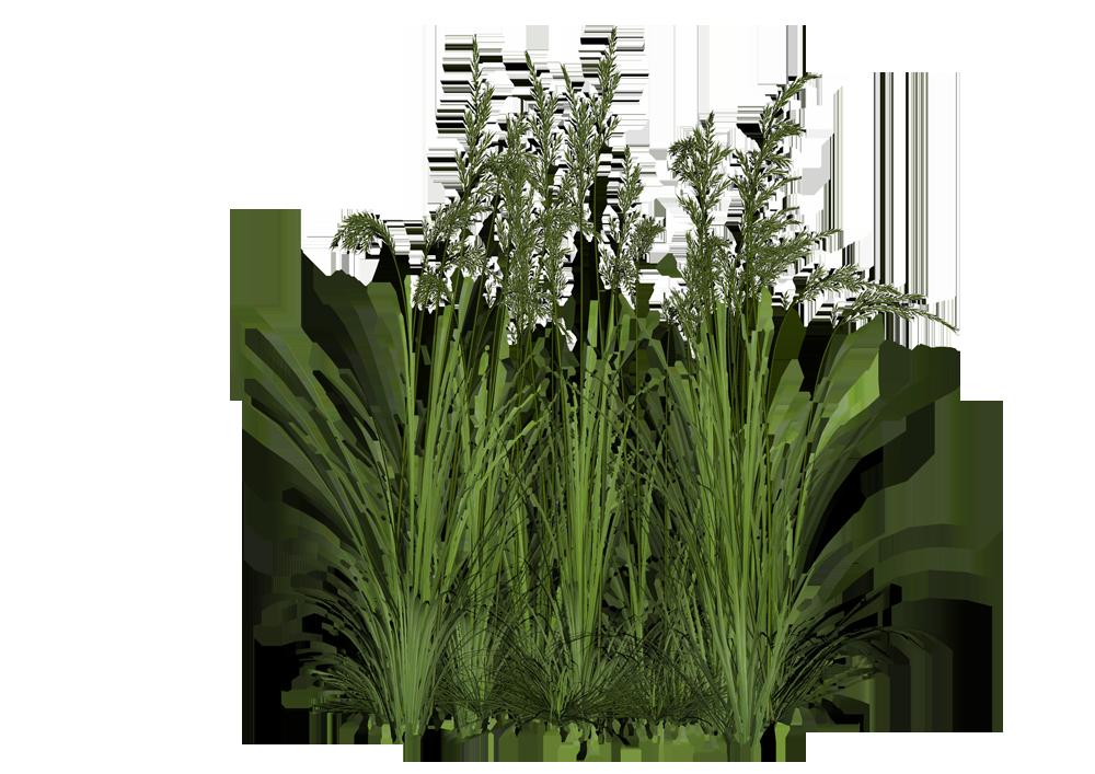 picture download Vector bushes grass.  landscape softscape plants