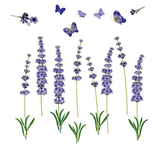 banner free library Lavender clipart. Free cliparts download clip