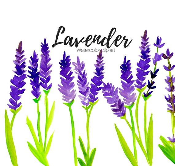 clipart black and white download Floral scent flower herb. Lavender clipart
