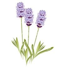 banner free library Free cliparts download clip. Lavender clipart