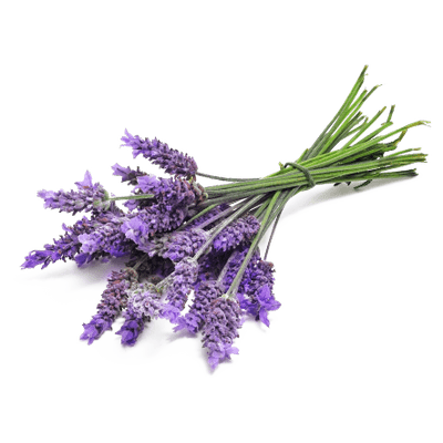 image free library Lavender clipart. Bunch close up transparent