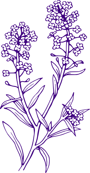 banner freeuse download Lavender clipart black and white.  collection of transparent.