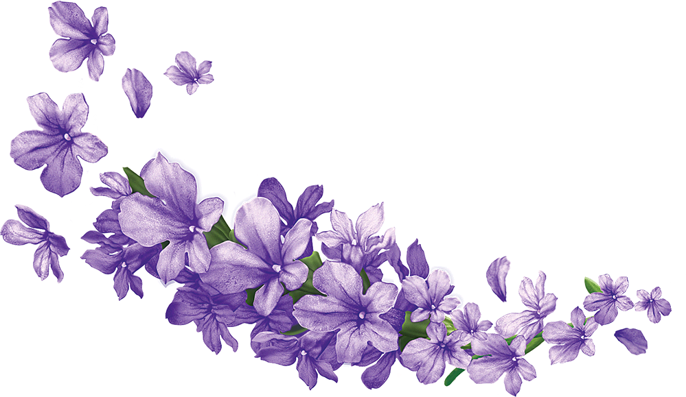 banner free download Pin by parfenos on. Lavender clipart bunga.