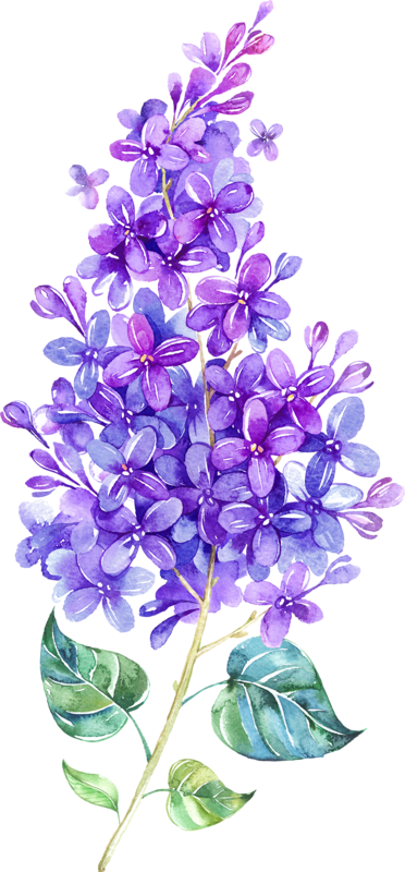 clip art free library lilacs drawing easy #98979392