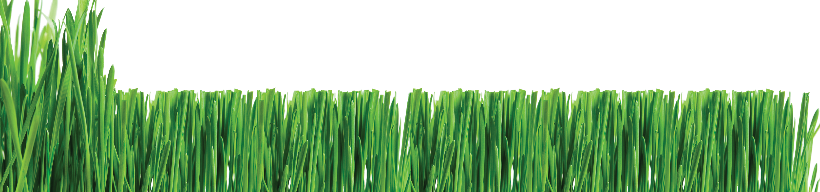 banner  collection of services. Lawn care clipart high grass.