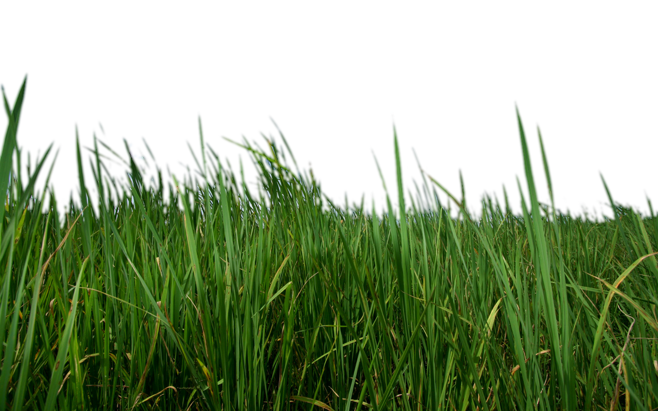 picture free library Lawn care clipart high grass. Png transparent images pluspng.
