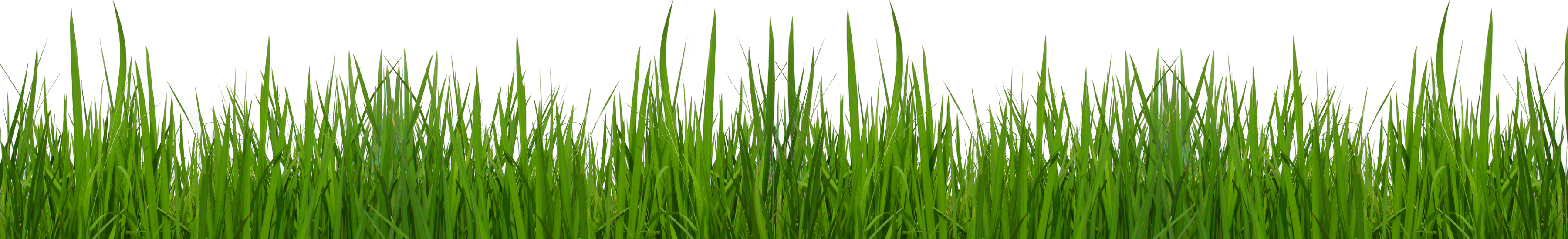 png transparent Png picture clipat gallery. Lawn care clipart high grass.