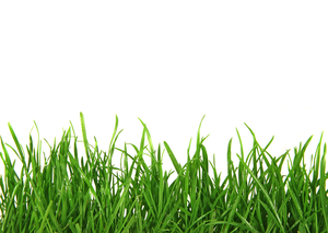 clip art freeuse Stock free images at. Lawn care clipart long grass