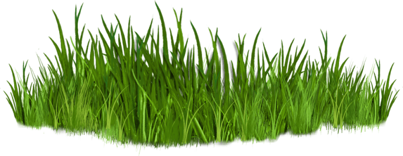 picture royalty free Professional maintenance services in. Lawn care clipart long grass