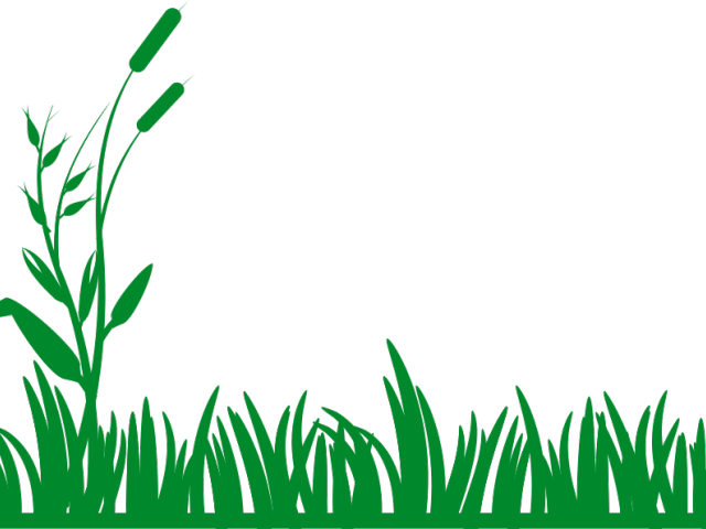 picture free stock Lawn free on dumielauxepices. Yard clipart grass yard