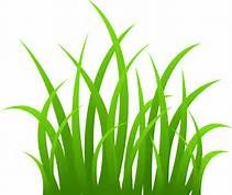 vector library Lawn clipart tall grass. Grasses in the jungle.