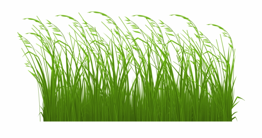 clipart black and white library Lawn clipart tall grass. Transparent free images long.