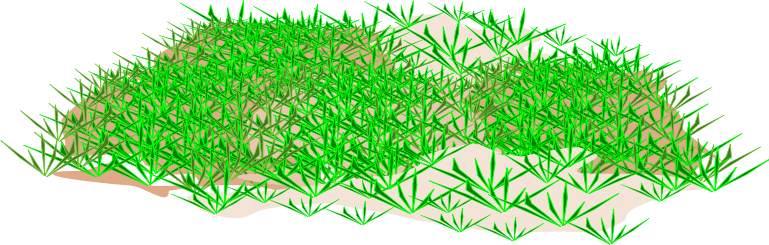 picture transparent library X free clip art. Lawn clipart wild grass.