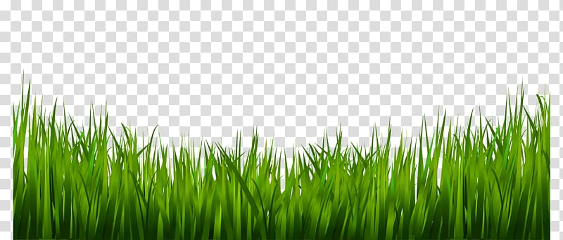 image library stock Lawn clipart wild grass. Texture mapping drawing tall.