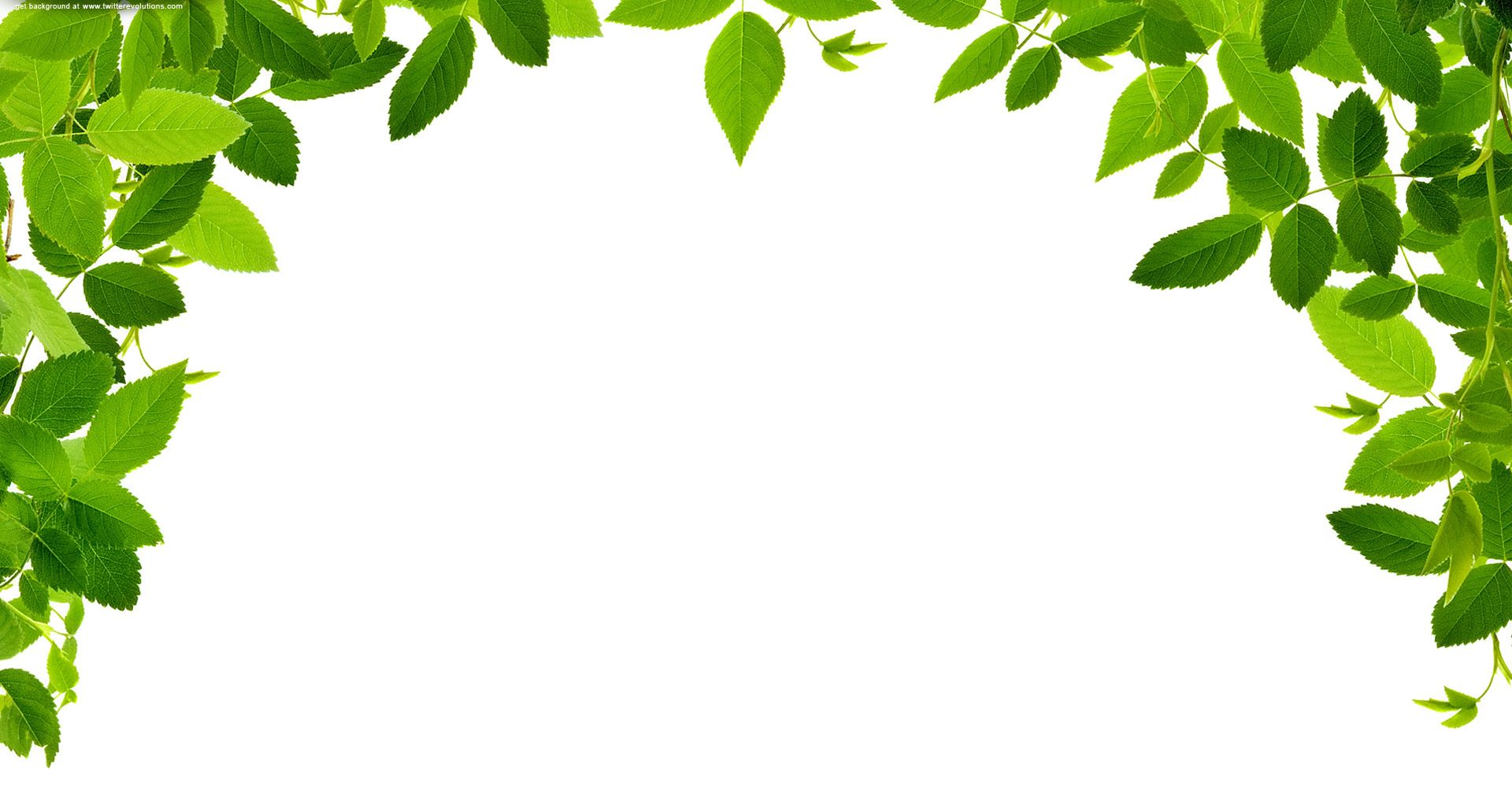 png freeuse stock Leaves real free images. Leaf border clipart