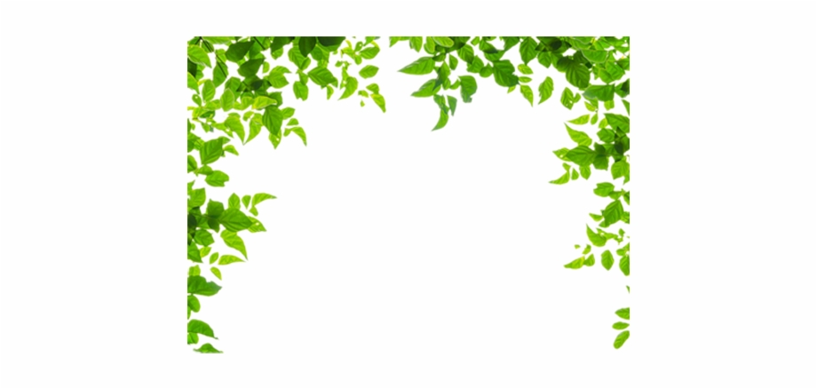 clipart royalty free download Leaf border clipart. And leaves green frames