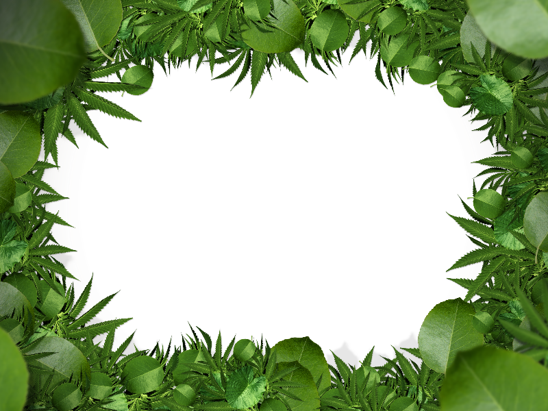 svg free Leaf border clipart. Nature green png free