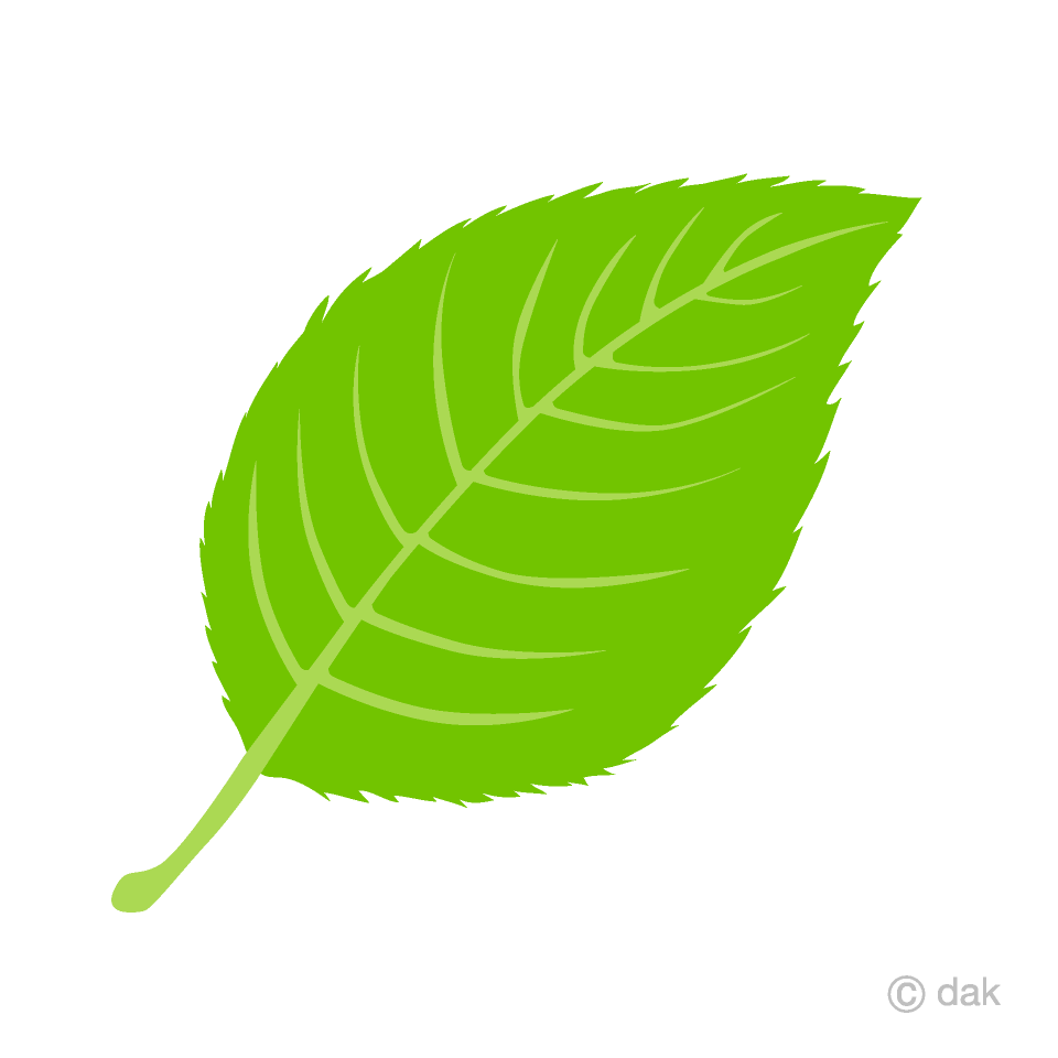 picture library library Leaf clipart. Free picture illustoon