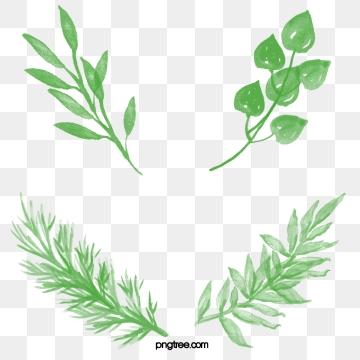 clip download Leaf clipart. Download free transparent png.