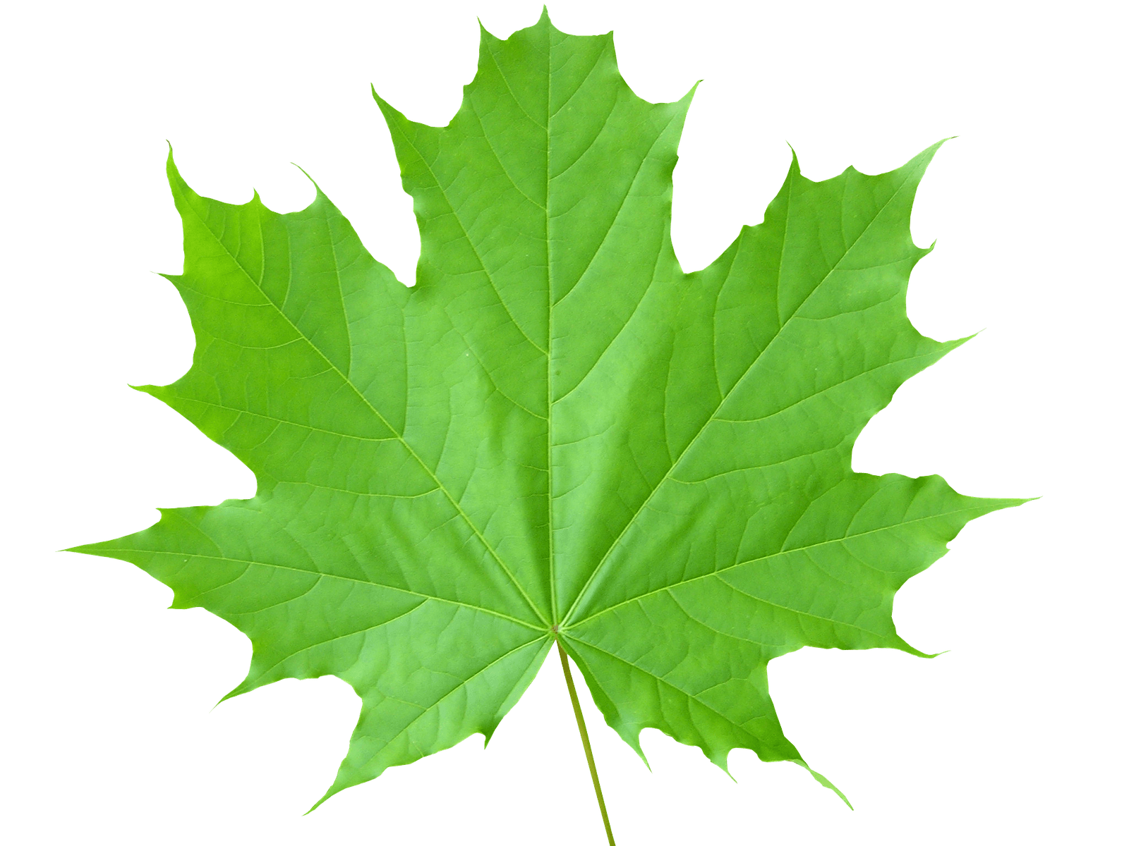 clip stock Leaf clipart greenery. Leaves png images transparent.