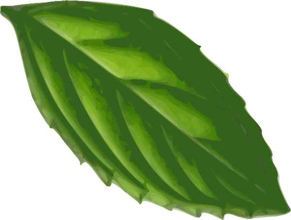 clipart free library Mint Leaf Drawing at GetDrawings