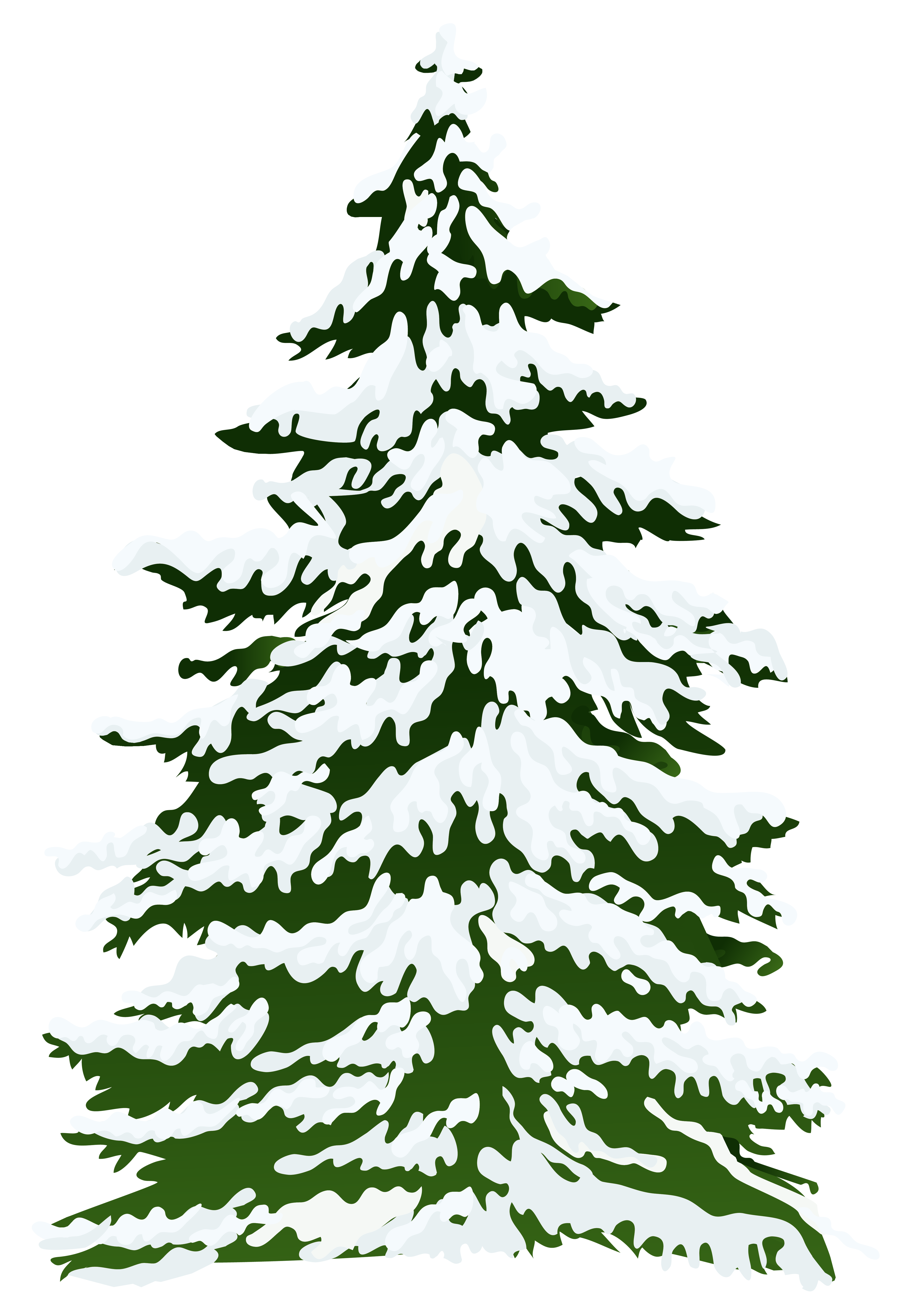 free stock Winter snowy pine png. Drawing snow tree