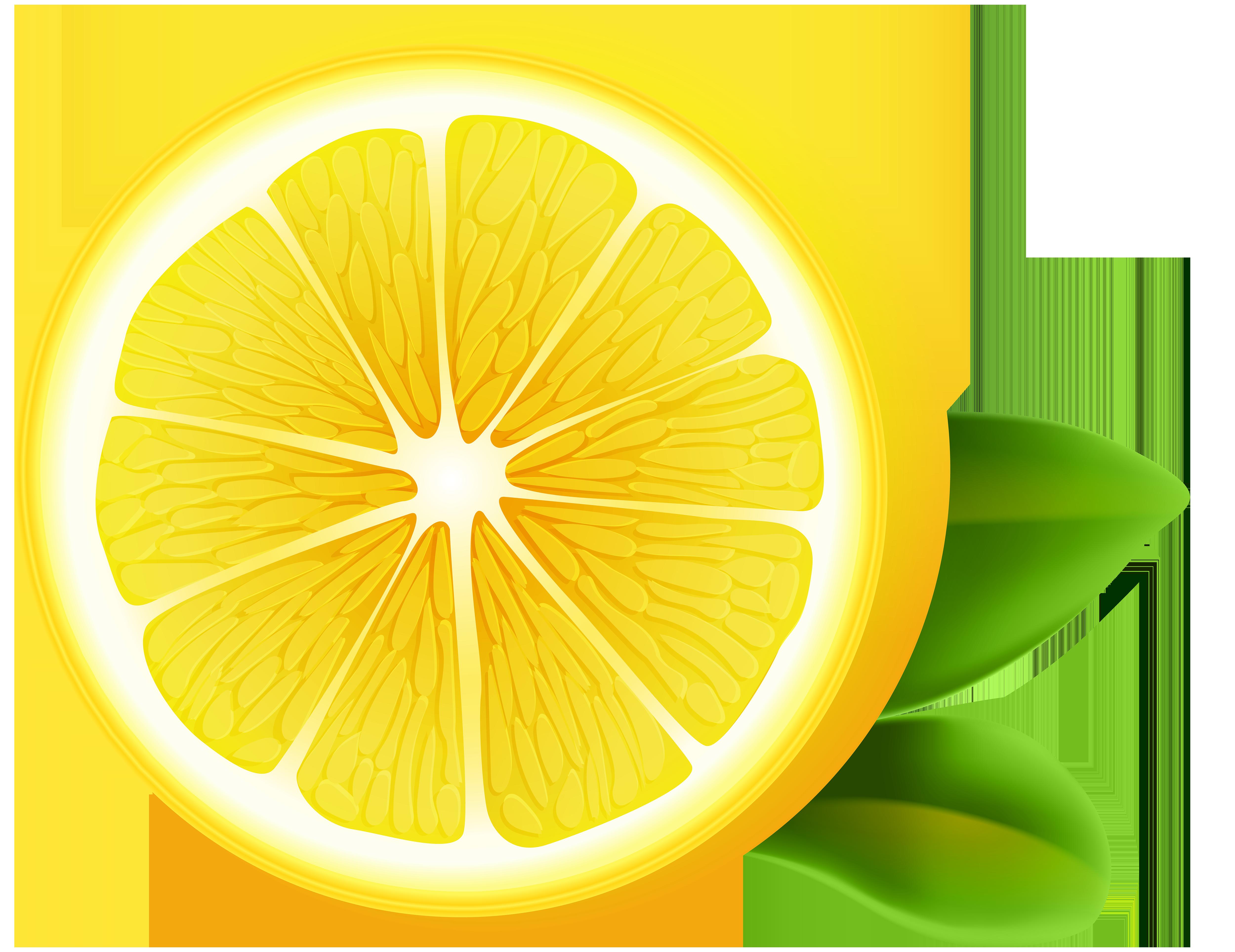 vector library download Lemon transparent png clip. Lemons clipart citron.